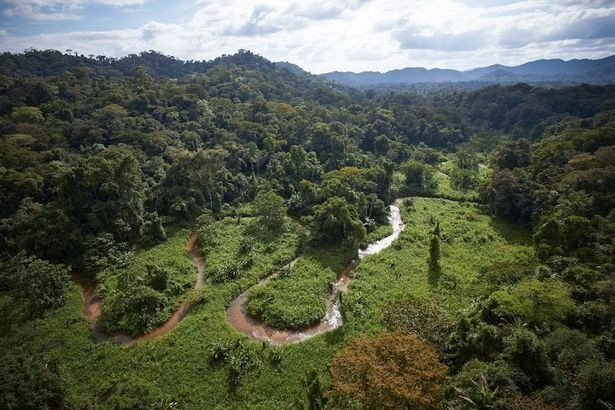Found it: The rainforest where the team searched for the legendary 'lost city' of Ciudad Blanca, or White City of the Monkey God