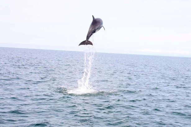 Soaring: Dolphin reaches 15ft