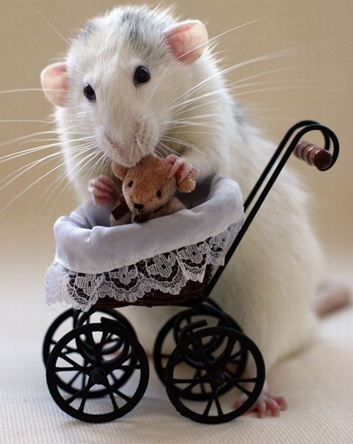 Mouse Mamma