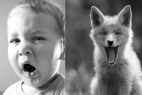They Yawn!