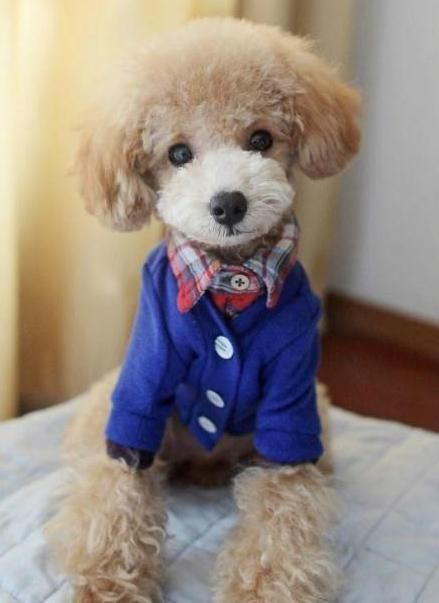 Preppy Pup