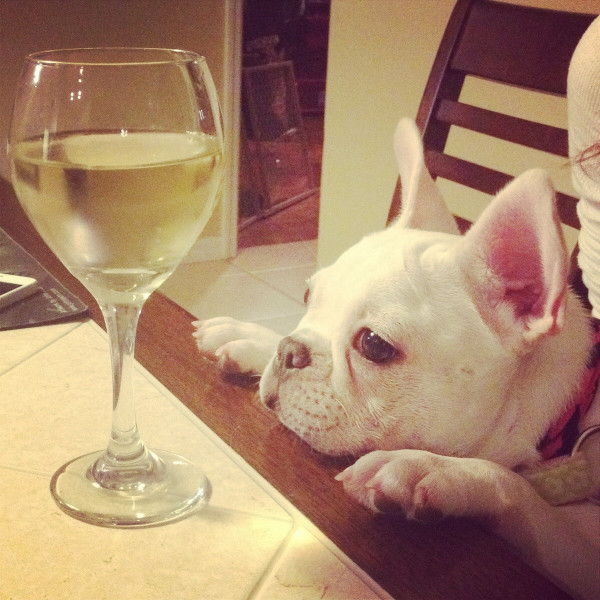 Wine for Frenchies