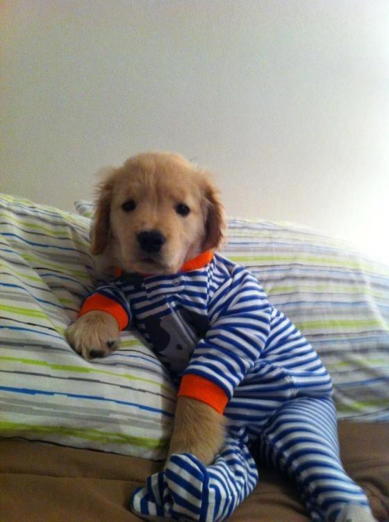 Pajama Pup
