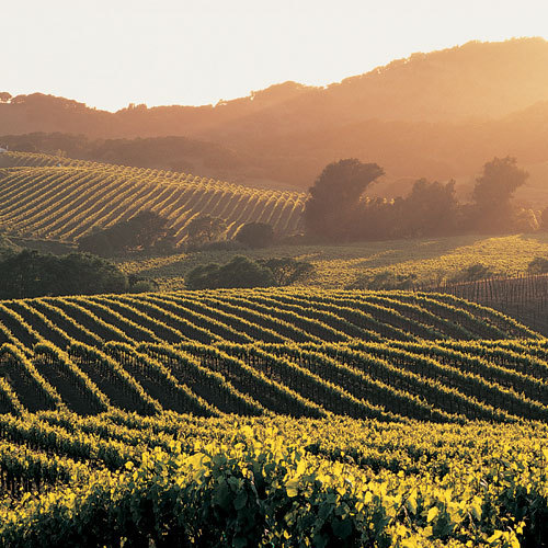 California is the fourth-largest producer of wine in the world, after Italy, France, and Spain