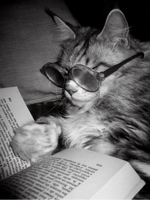 French-loving Cat