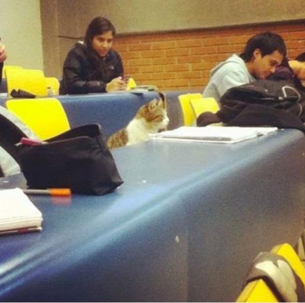 Lecture-loving Cat