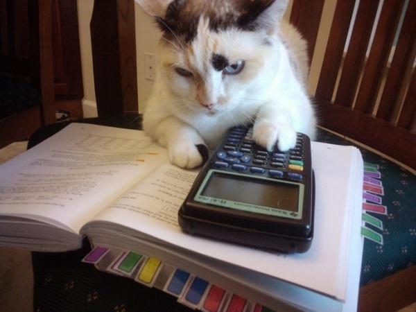 Math-loving Cat