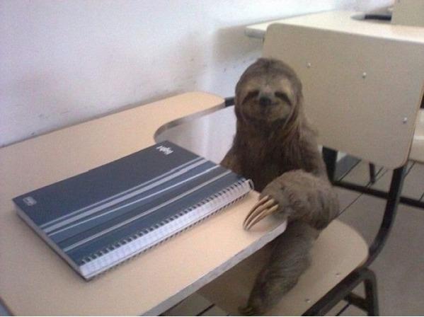 Super Smart Sloth