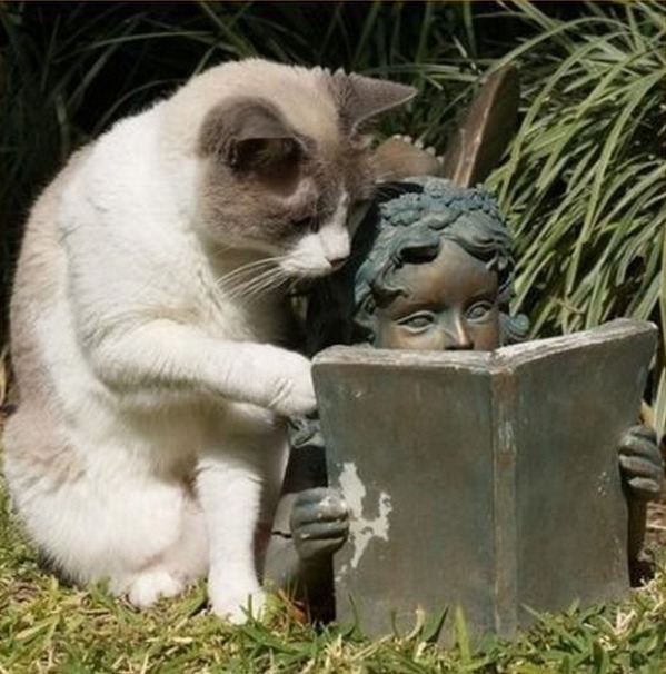 The Cat Tutor