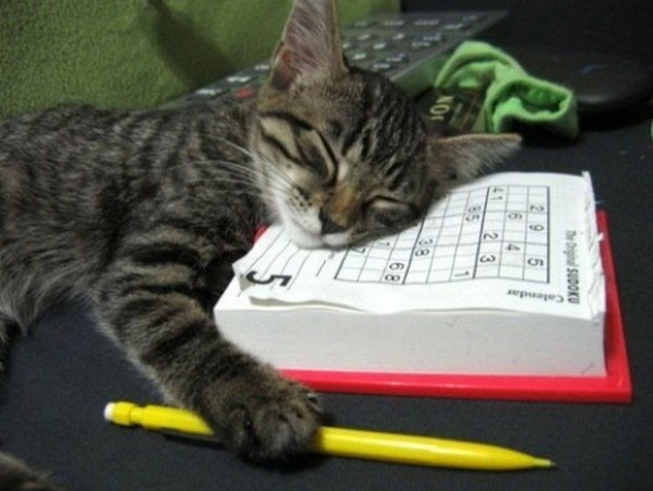 Sudoku-loving Kitty