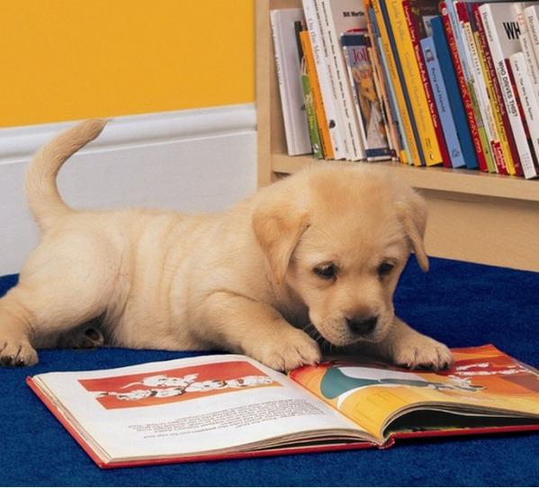 Literature-loving Puppy