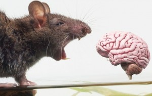 Scientists build digital rat brain in 'tour de force' - and a cyborg human mind could be next