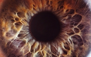 Amazing Closeups Of The Human Eye