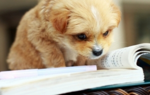 Animals that Love School