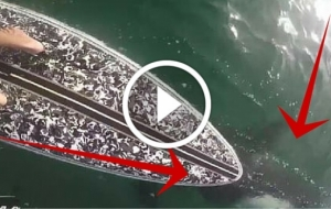 Paddle Boarder Sees HUGE Mass Swim Beneath Him. What Happens Next Leaves Him 'FREAKED'